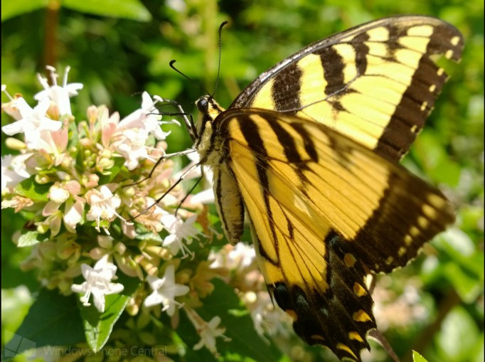 Lumia_1020_Butterfly_Crop