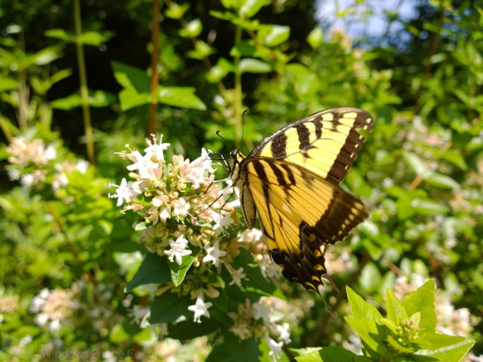 Lumia_1020_Butterfly_Full