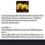 Screenshot_2013-07-20-02-06-25