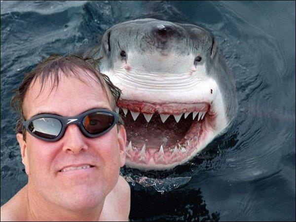 20.-Shark-Selfie-Copy