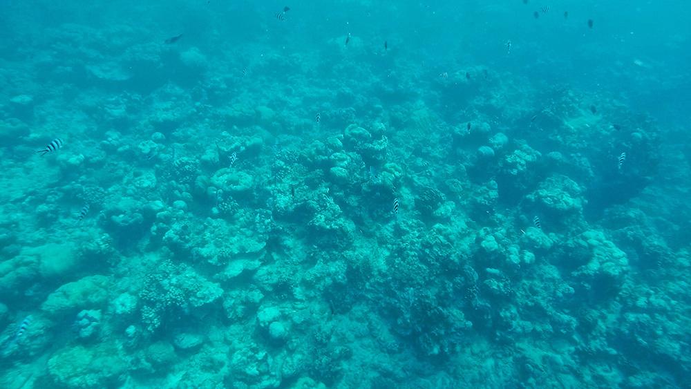coral-mauritius